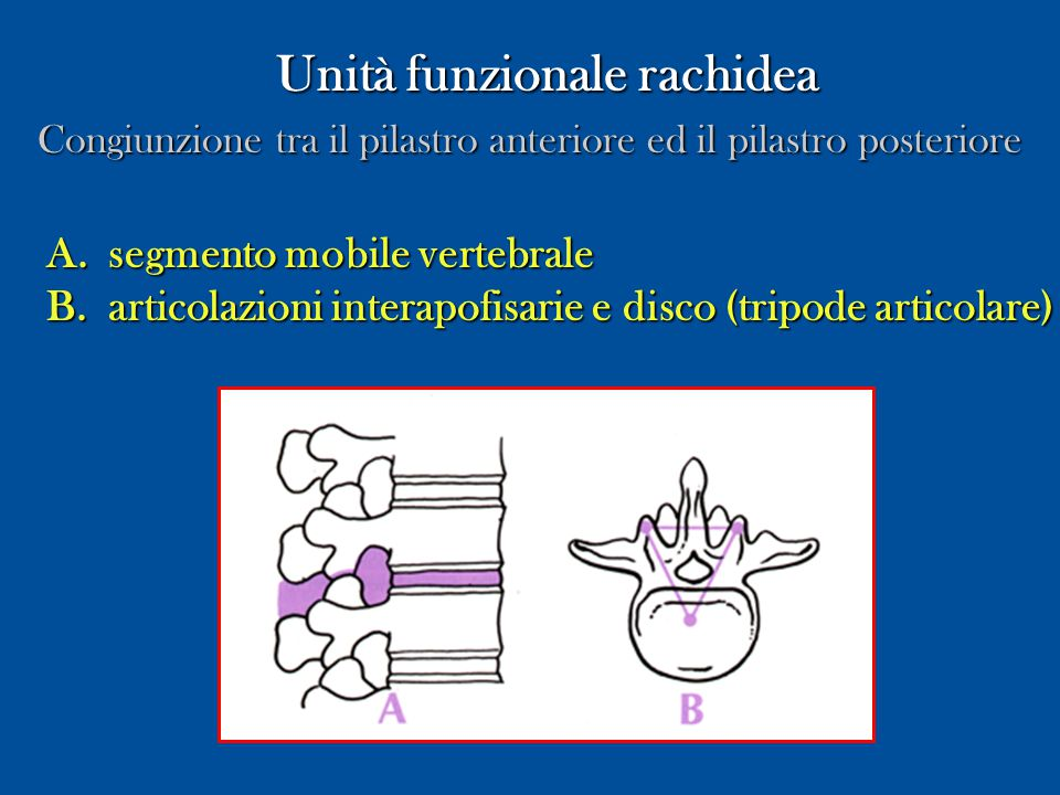 Unità funzionale rachidea Unità funzionale rachidea Congiunzione tra il pilastro anteriore ed il pilastro posteriore A.segmento mobile vertebrale B.ar