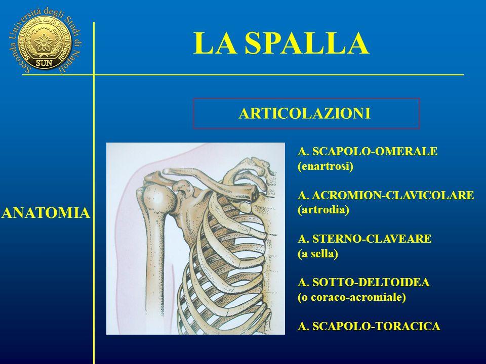 A.SCAPOLO-OMERALE (enartrosi) A. ACROMION-CLAVICOLARE (artrodia) A.