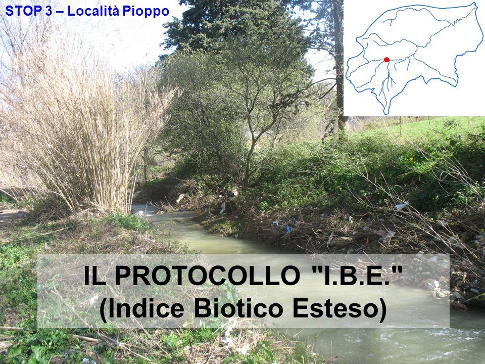 STOP 3 – Località Pioppo IL PROTOCOLLO I.B.E. (Indice Biotico Esteso)