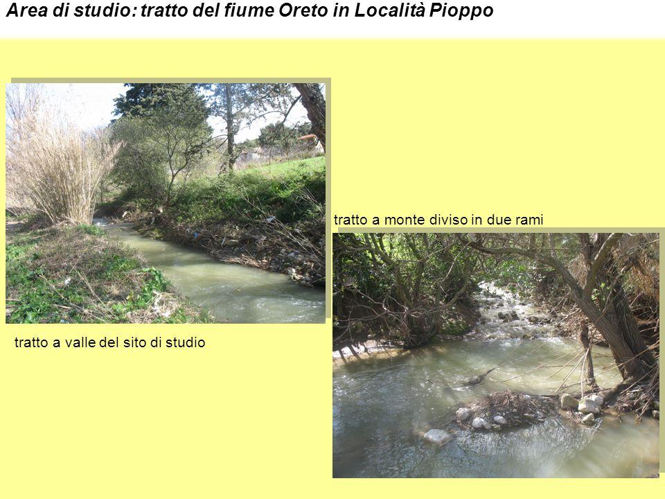 Area di studio: tratto del fiume Oreto in Località Pioppo tratto a valle del sito di studio tratto a monte diviso in due rami