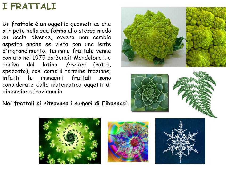 Nei frattali si ritrovano i numeri di Fibonacci.
