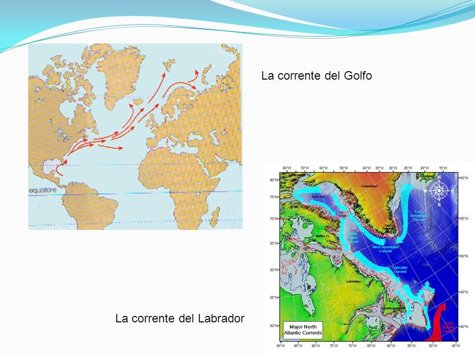La corrente del Golfo La corrente del Labrador