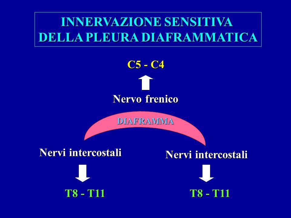 DIAFRAMMA INNERVAZIONE SENSITIVA DELLA PLEURA DIAFRAMMATICA Nervo frenico C5 - C4 Nervi intercostali T8 - T11