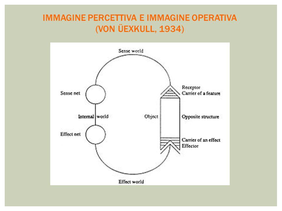 IMMAGINE PERCETTIVA E IMMAGINE OPERATIVA (VON ÜEXKULL, 1934)