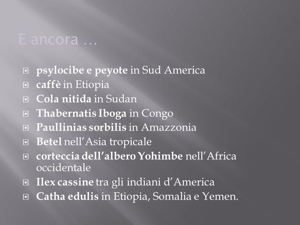 E ancora …  psylocibe e peyote in Sud America  caffè in Etiopia  Cola nitida in Sudan  Thabernatis Iboga in Congo  Paullinias sorbilis in Amazzon