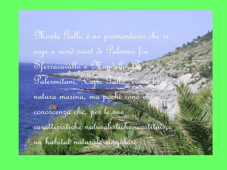 Monte Gallo è un promontorio che si erge a nord ovest di Palermo fra Sferracavallo e Mondello.