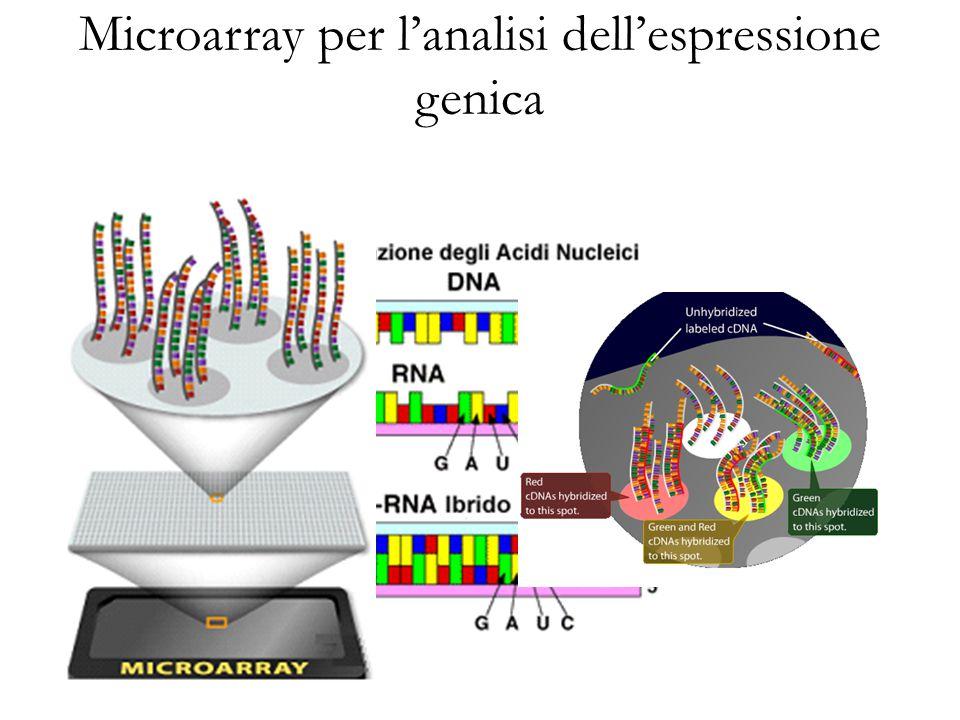Microarray per l'analisi dell'espressione genica