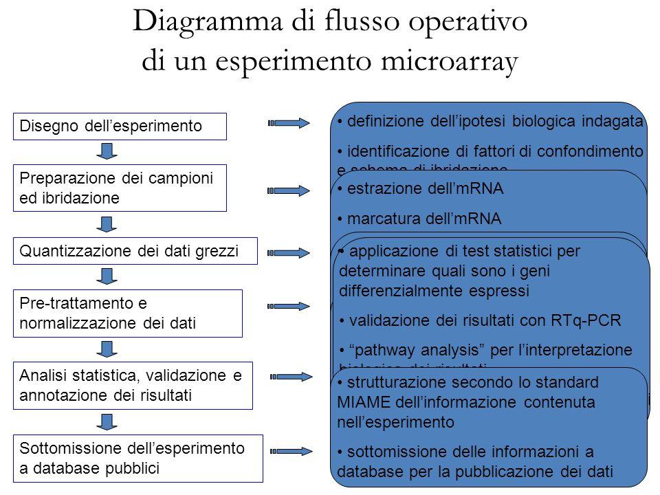 Diagramma di flusso operativo di un esperimento microarray Disegno dell'esperimento Preparazione dei campioni ed ibridazione Sottomissione dell'esperi