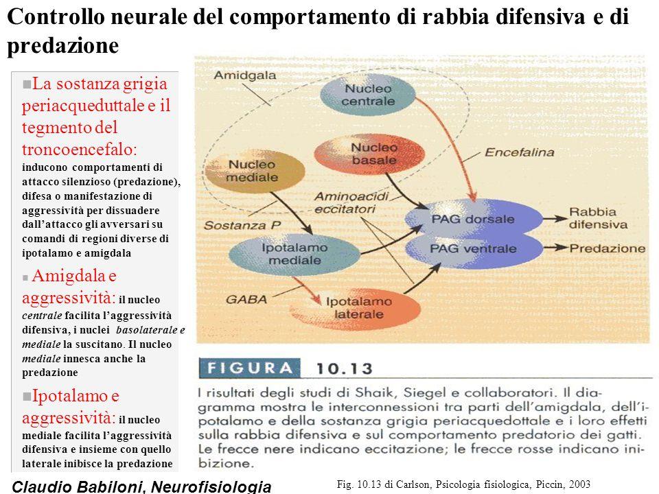 Claudio Babiloni, Neurofisiologia Controllo neurale del comportamento di rabbia difensiva e di predazione n La sostanza grigia periacqueduttale e il t