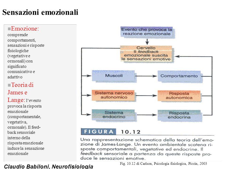 Claudio Babiloni, Neurofisiologia Controllo neurale dei modelli organizzati di risposta emozionale: il ruolo dell'amigdala n L'amigdala: organizza le risposte comportamentali, vegetative e ormonali di rabbia, paura e ansia ed è implicata nei comportamenti sessuali e materni n Connessioni anatomiche: l'amigdala è costituita da nuclei basolaterali che ricevono informazioni sensoriali da corteccia e talamo, da un nucleo mediale che riceve informazioni olfattive dal bulbo olfattivo e accessorio e da un nucleo centrale che invia comandi a strutture motorie del troncoencefalo e all'ipotalamo (funzioni vegetative e comportamenti specie- specifici) Fig.
