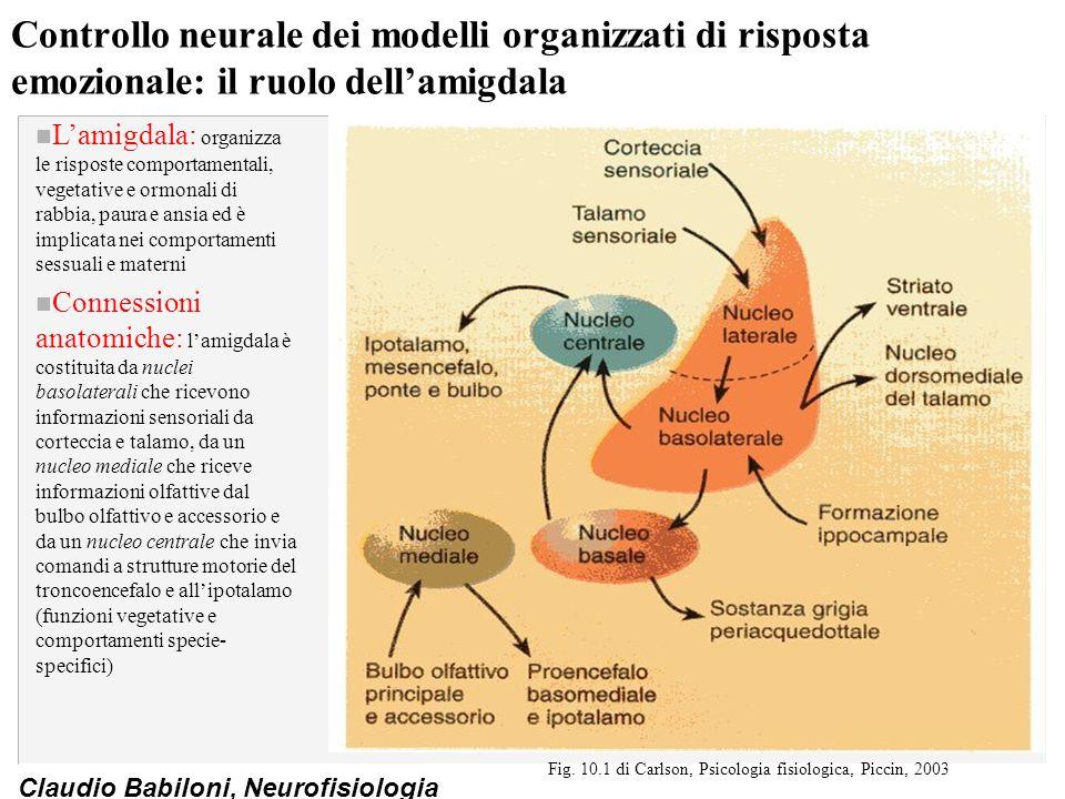 Claudio Babiloni, Neurofisiologia Controllo neurale dei modelli organizzati di risposta emozionale: il ruolo dell'amigdala n L'amigdala: organizza le