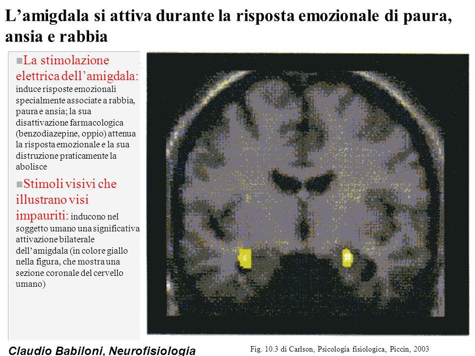 Claudio Babiloni, Neurofisiologia L'amigdala si attiva durante la risposta emozionale di paura, ansia e rabbia n La stimolazione elettrica dell'amigda