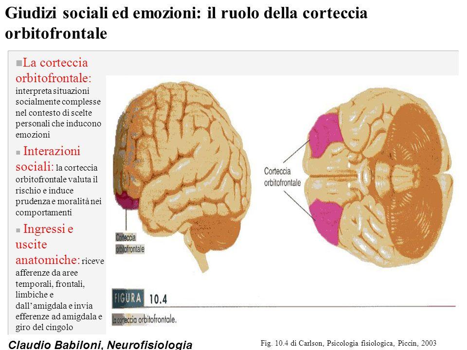 Claudio Babiloni, Neurofisiologia Giudizi sociali ed emozioni: il ruolo della corteccia orbitofrontale n La corteccia orbitofrontale: interpreta situa