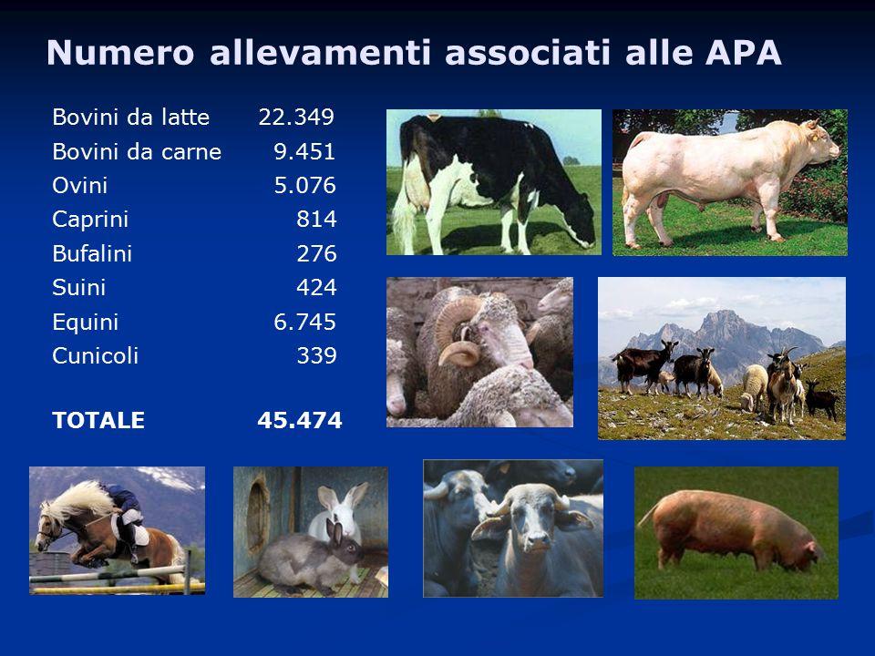 Numero allevamenti associati alle APA Bovini da latte 22.349 Bovini da carne 9.451 Ovini 5.076 Caprini 814 Bufalini 276 Suini 424 Equini 6.745 Cunicoli 339 TOTALE 45.474