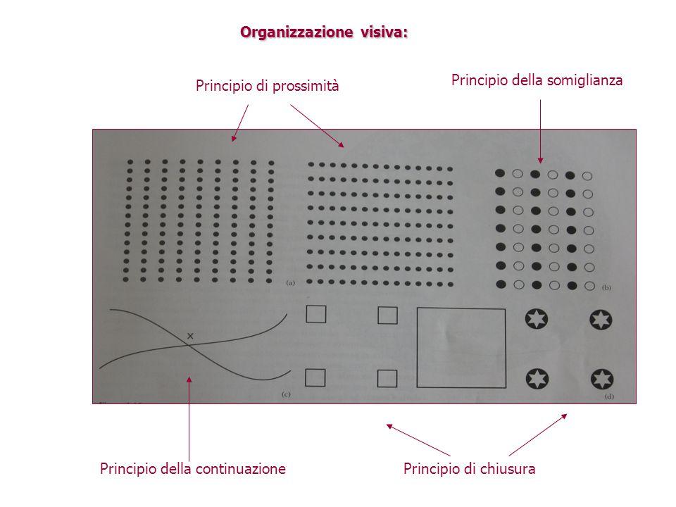 Organizzazione visiva: Principio di prossimità Principio della somiglianza Principio della continuazionePrincipio di chiusura