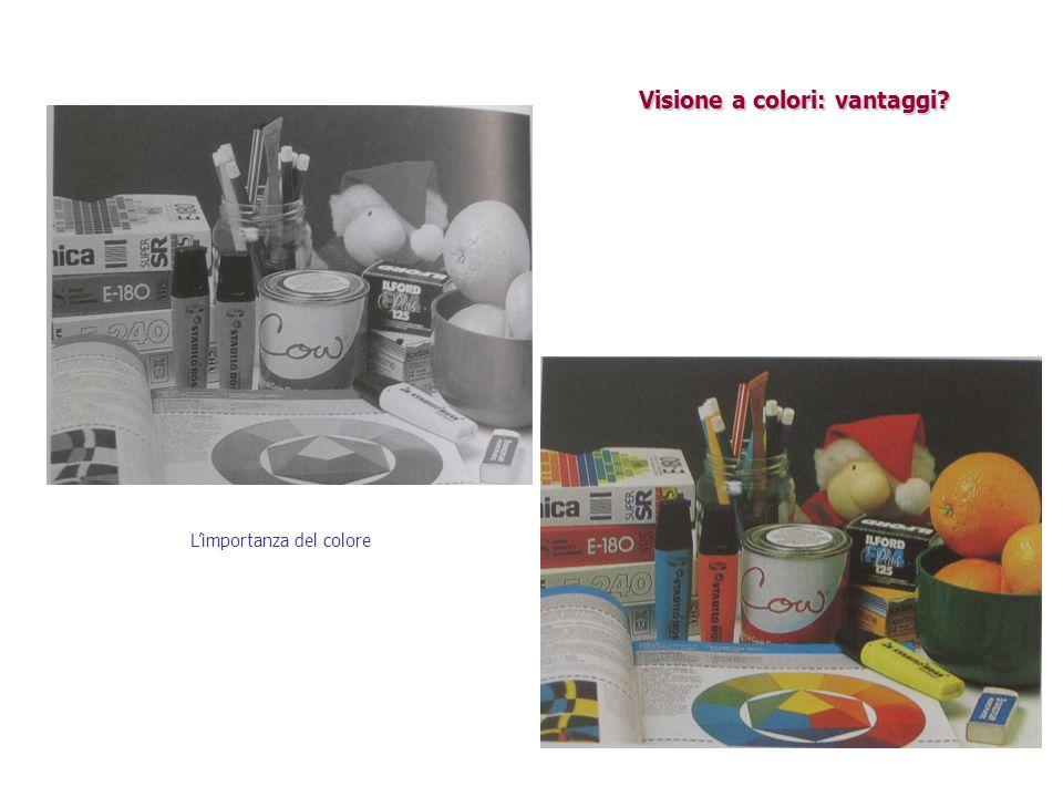 Visione a colori: vantaggi? L'importanza del colore