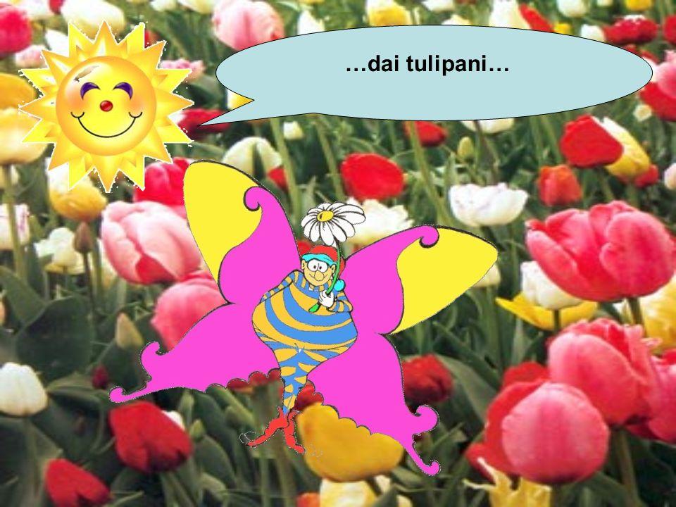 …dai tulipani…