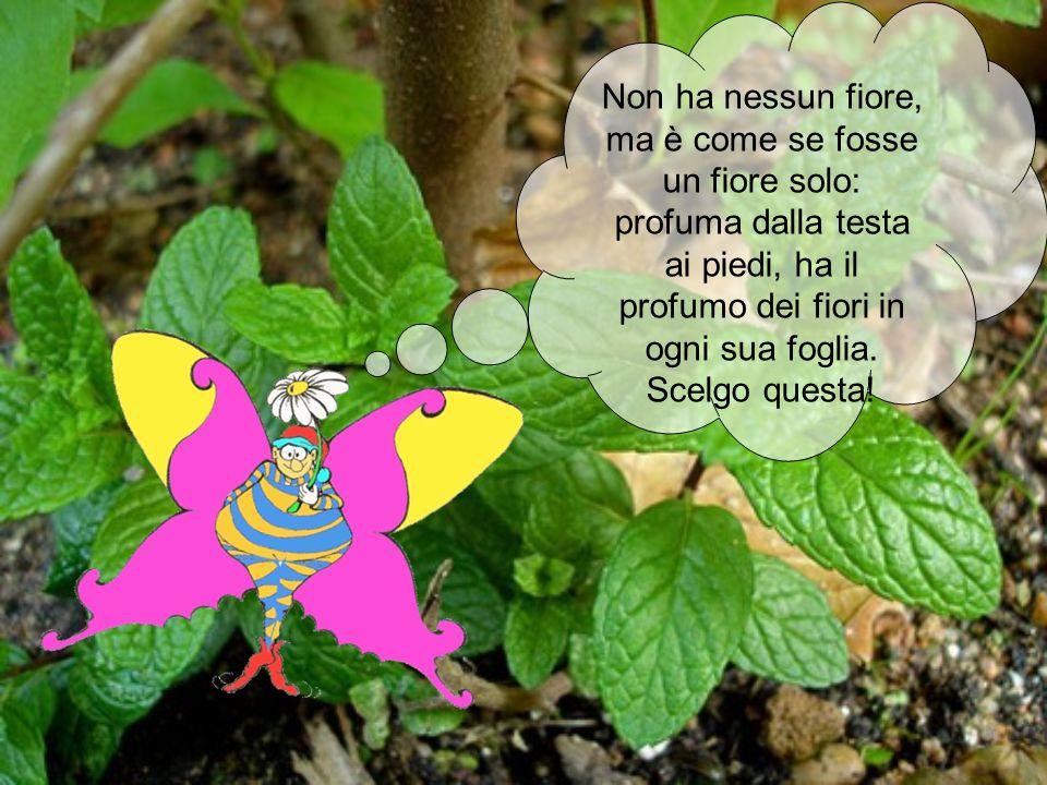 Non ha nessun fiore, ma è come se fosse un fiore solo: profuma dalla testa ai piedi, ha il profumo dei fiori in ogni sua foglia. Scelgo questa!
