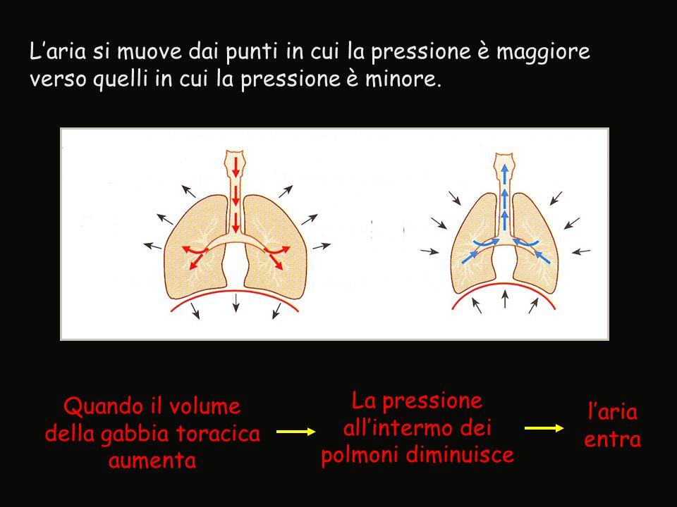 L'aria si muove dai punti in cui la pressione è maggiore verso quelli in cui la pressione è minore. Quando il volume della gabbia toracica aumenta La