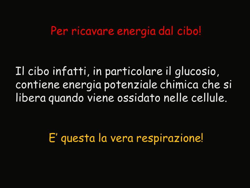 Per ricavare energia dal cibo! Il cibo infatti, in particolare il glucosio, contiene energia potenziale chimica che si libera quando viene ossidato ne