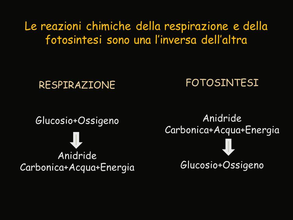 FOTOSINTESI Anidride Carbonica+Acqua+Energia Glucosio+Ossigeno RESPIRAZIONE Glucosio+Ossigeno Anidride Carbonica+Acqua+Energia Le reazioni chimiche de