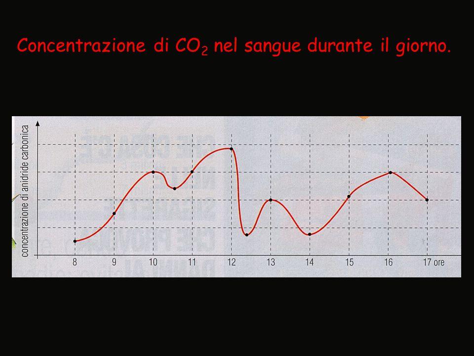 Concentrazione di CO 2 nel sangue durante il giorno.