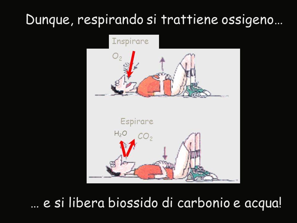 … e si libera biossido di carbonio e acqua! Espirare CO 2 Inspirare O 2 Dunque, respirando si trattiene ossigeno… H2OH2O