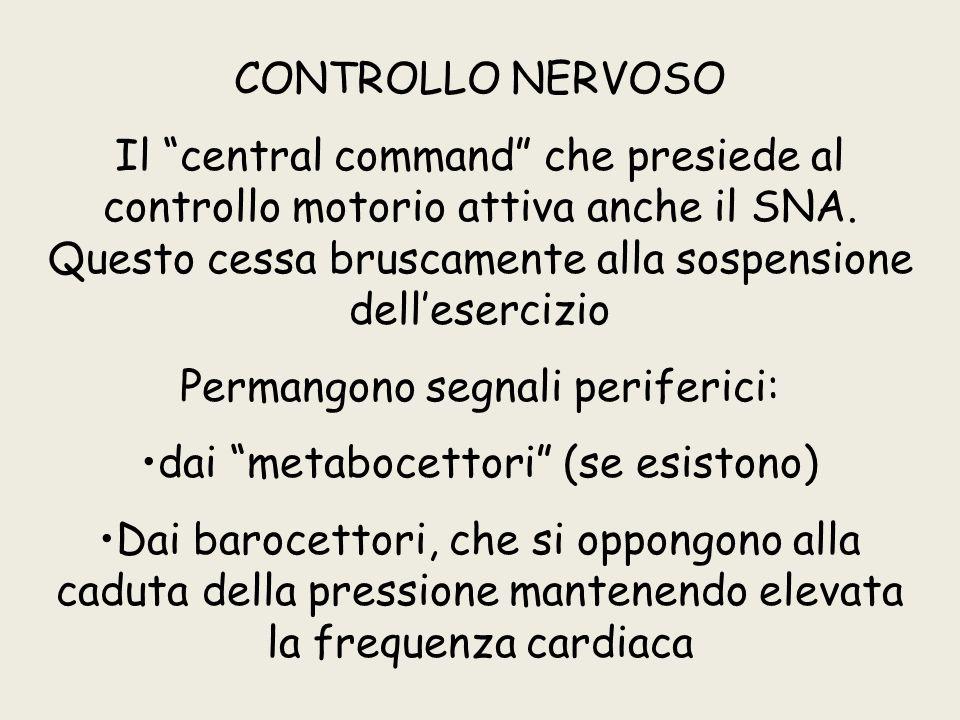 """CONTROLLO NERVOSO Il """"central command"""" che presiede al controllo motorio attiva anche il SNA. Questo cessa bruscamente alla sospensione dell'esercizio"""