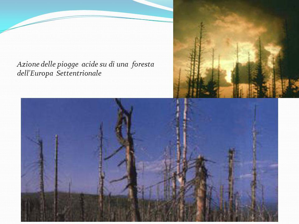 Azione delle piogge acide su di una foresta dell'Europa Settentrionale