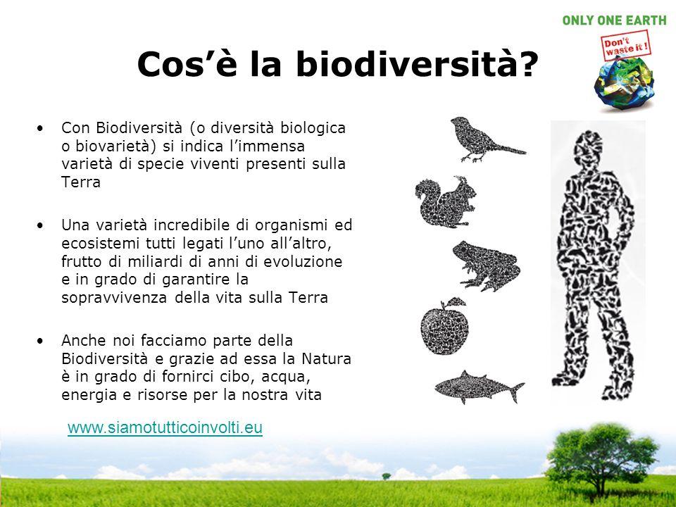 Cos'è la biodiversità? Con Biodiversità (o diversità biologica o biovarietà) si indica l'immensa varietà di specie viventi presenti sulla Terra Una va
