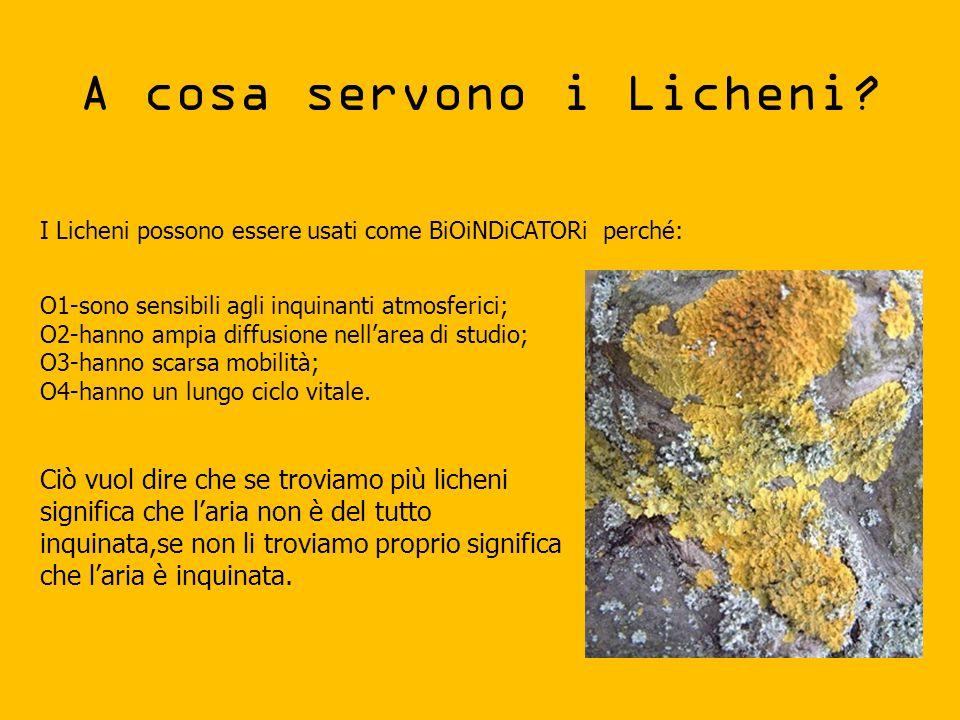 A cosa servono i Licheni? I Licheni possono essere usati come BiOiNDiCATORi perché: O1-sono sensibili agli inquinanti atmosferici; O2-hanno ampia diff