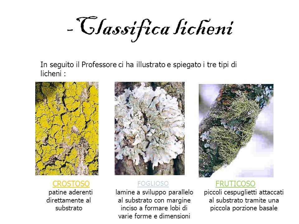 -Classifica licheni In seguito il Professore ci ha illustrato e spiegato i tre tipi di licheni : CROSTOSO patine aderenti direttamente al substrato FO