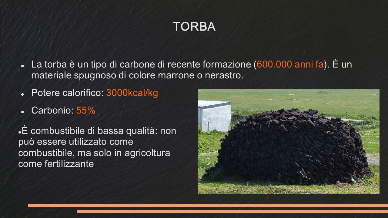 TORBA La torba è un tipo di carbone di recente formazione (600.000 anni fa).