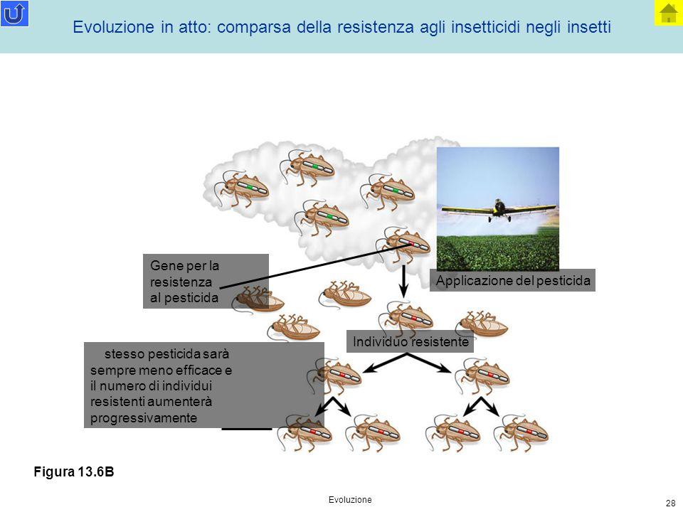 Evoluzione 28 Applicazione del pesticida Individuo resistente Gene per la resistenza al pesticida lo stesso pesticida sarà sempre meno efficace e il n