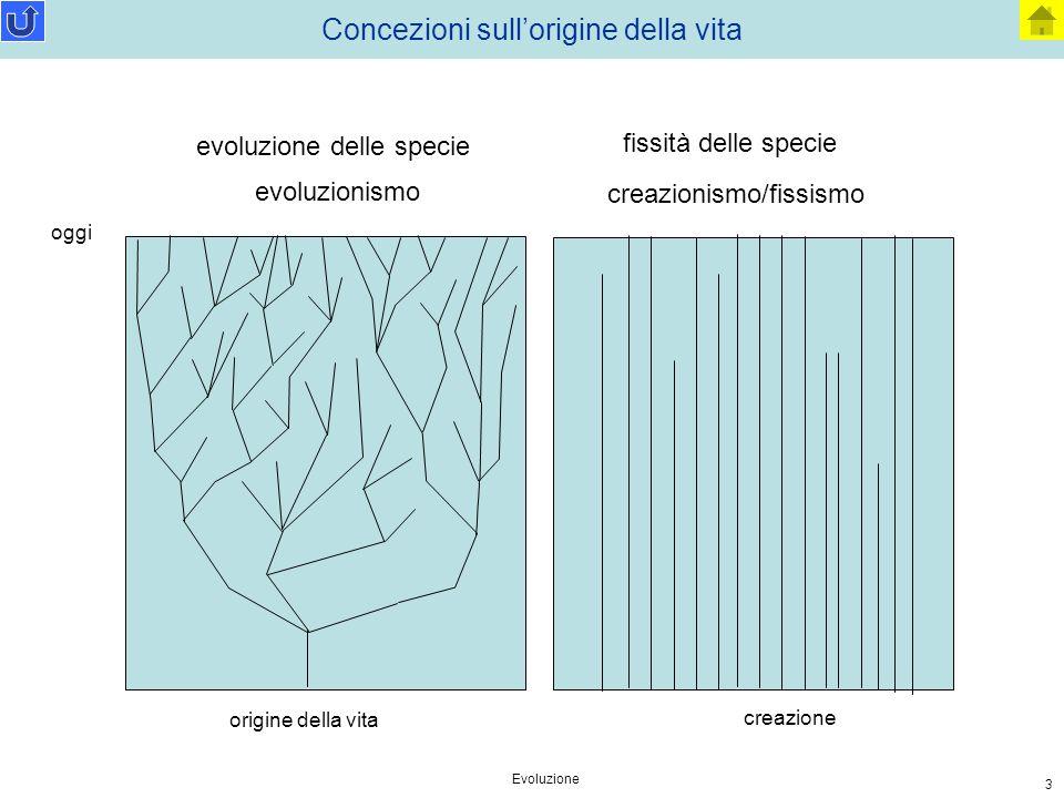 Evoluzione 3 Concezioni sull'origine della vita evoluzionismo creazionismo/fissismo evoluzione delle specie fissità delle specie oggi origine della vi