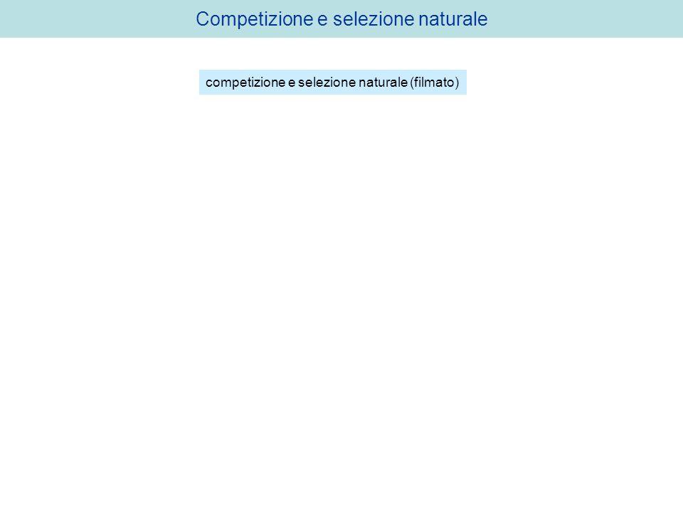 Competizione e selezione naturale competizione e selezione naturale (filmato)