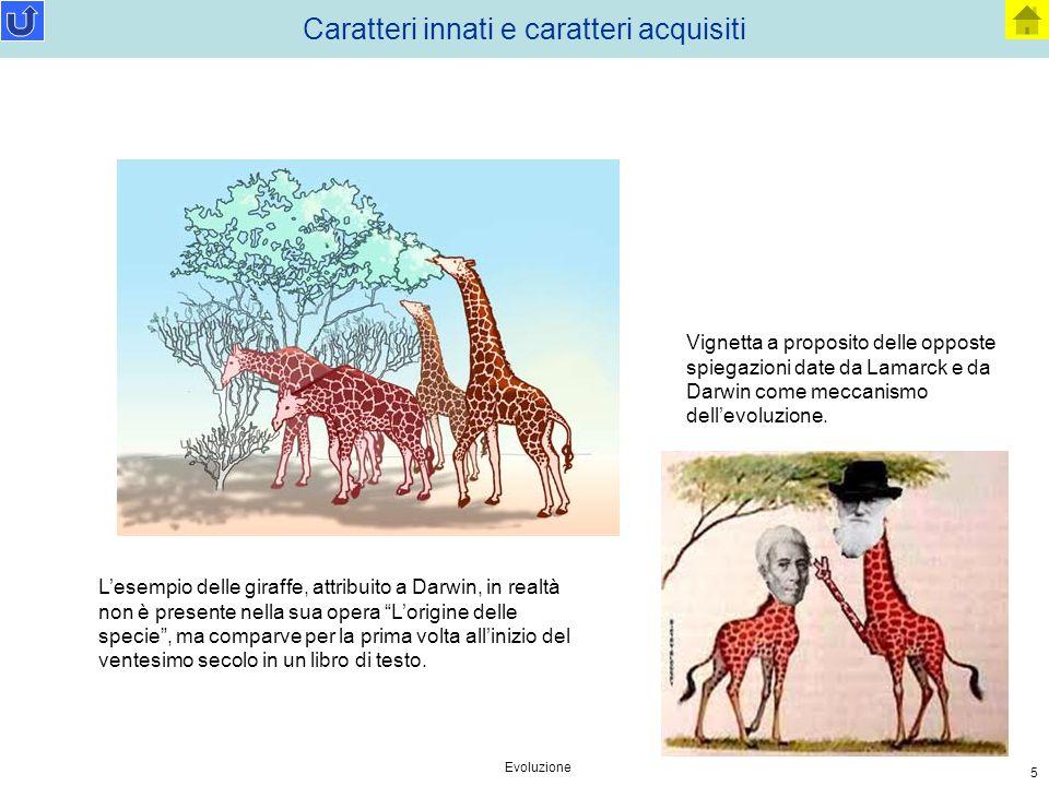 """Evoluzione 5 Caratteri innati e caratteri acquisiti L'esempio delle giraffe, attribuito a Darwin, in realtà non è presente nella sua opera """"L'origine"""