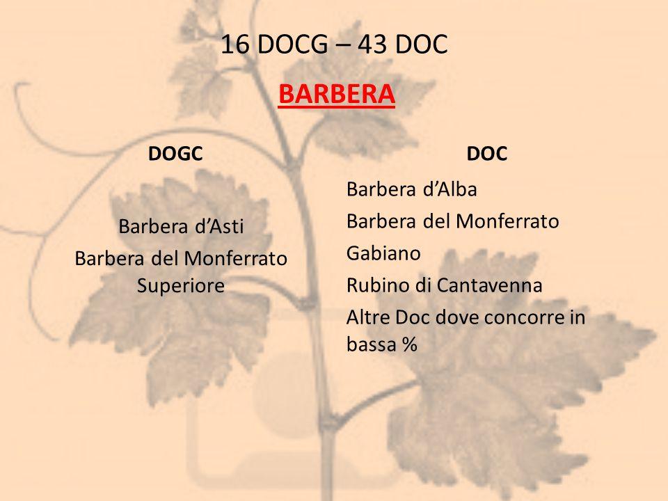 16 DOCG – 43 DOC DOGC Barbera d'Asti Barbera del Monferrato Superiore DOC Barbera d'Alba Barbera del Monferrato Gabiano Rubino di Cantavenna Altre Doc
