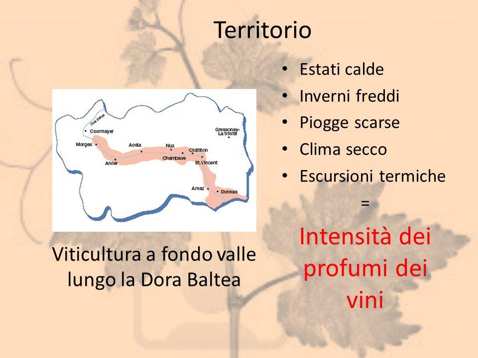 Territorio Estati calde Inverni freddi Piogge scarse Clima secco Escursioni termiche = Intensità dei profumi dei vini Viticultura a fondo valle lungo