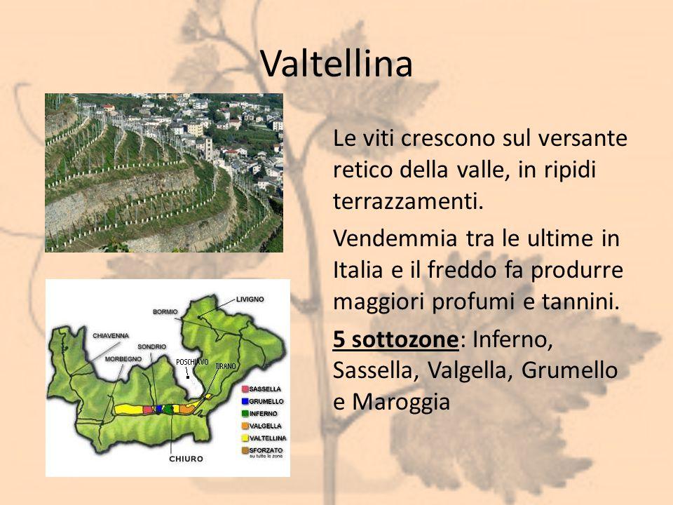 Valtellina Le viti crescono sul versante retico della valle, in ripidi terrazzamenti. Vendemmia tra le ultime in Italia e il freddo fa produrre maggio