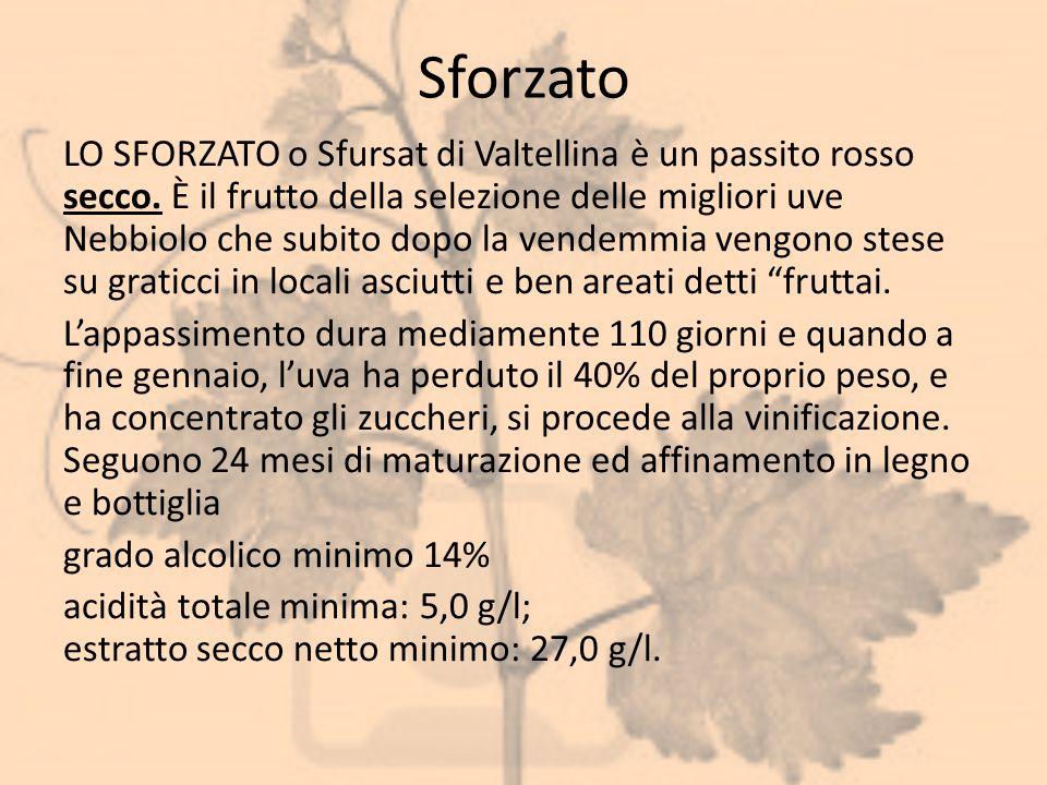 Sforzato LO SFORZATO o Sfursat di Valtellina è un passito rosso secco. È il frutto della selezione delle migliori uve Nebbiolo che subito dopo la vend