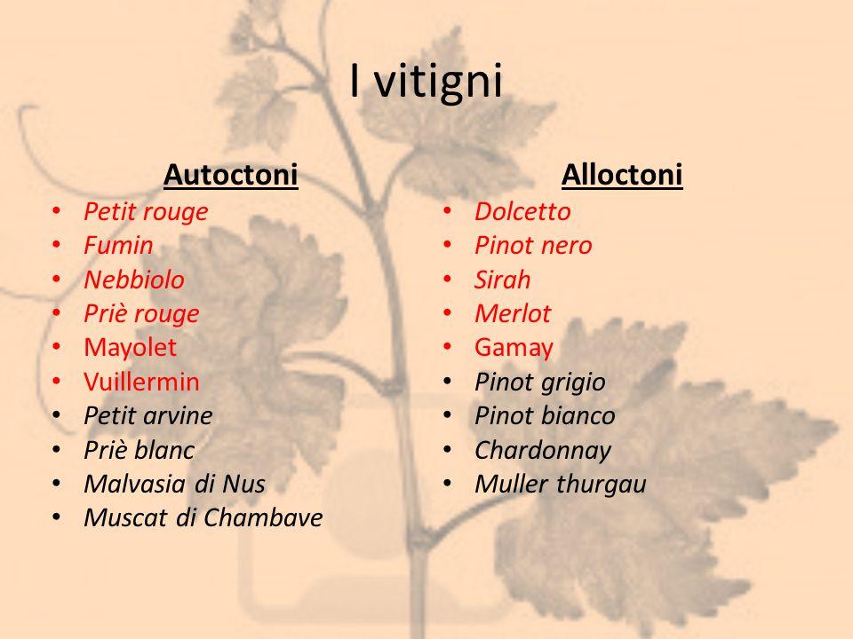 I vitigni Autoctoni Petit rouge Fumin Nebbiolo Priè rouge Mayolet Vuillermin Petit arvine Priè blanc Malvasia di Nus Muscat di Chambave Alloctoni Dolc