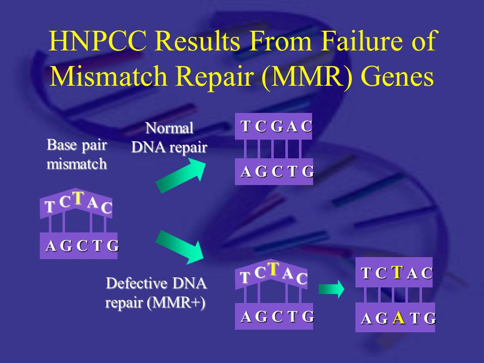 HNPCC Results From Failure of Mismatch Repair (MMR) Genes Base pair mismatch Normal DNA repair Defective DNA repair (MMR+) T CTA C A G C T G T C G A C