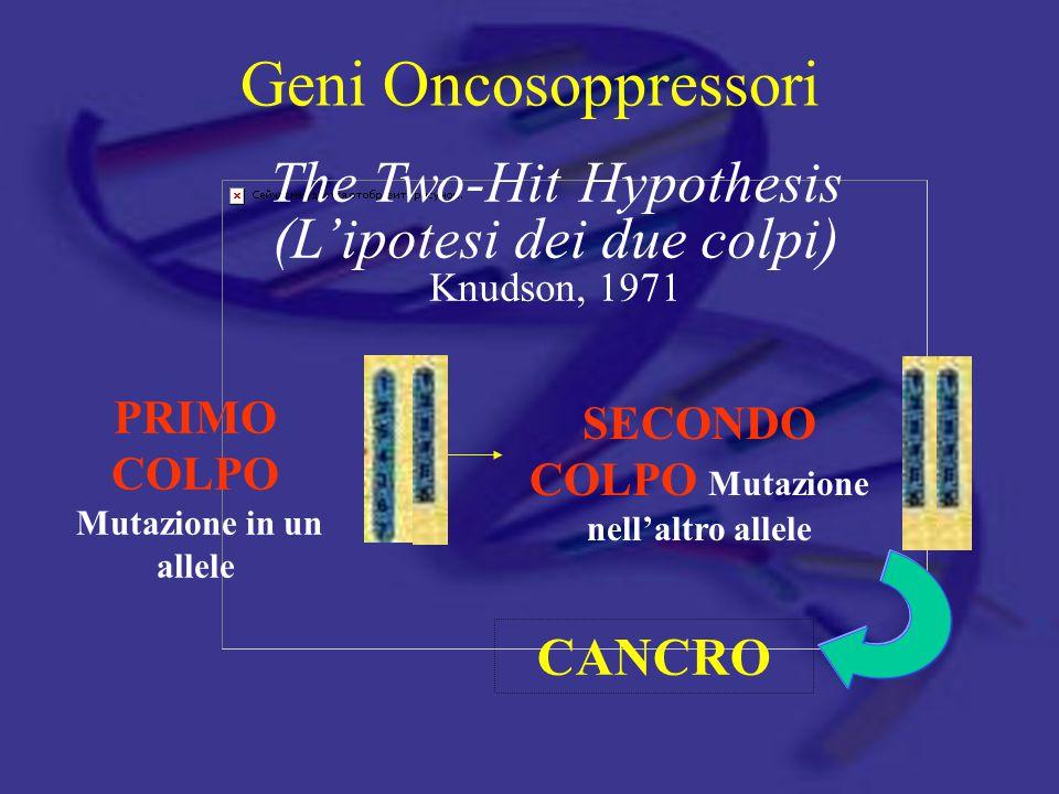 Geni Oncosoppressori PRIMO COLPO Mutazione in un allele CANCRO SECONDO COLPO Mutazione nell'altro allele The Two-Hit Hypothesis (L'ipotesi dei due col