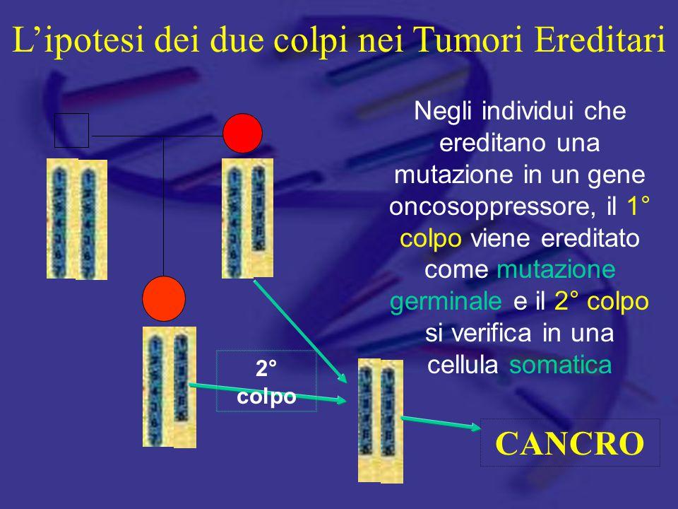 Negli individui che ereditano una mutazione in un gene oncosoppressore, il 1° colpo viene ereditato come mutazione germinale e il 2° colpo si verifica