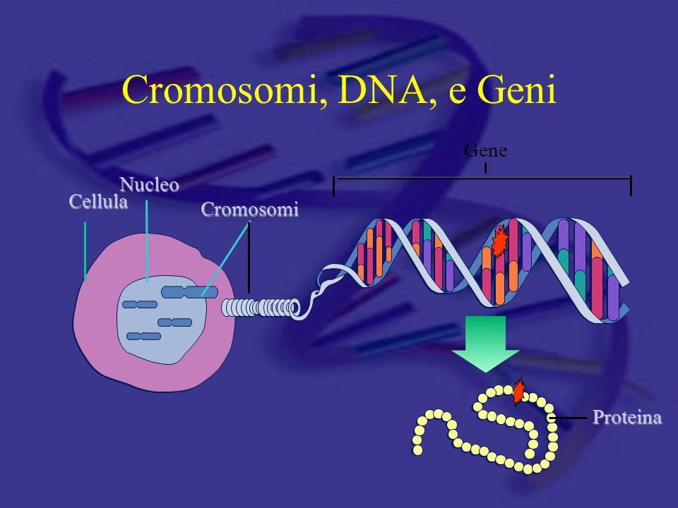 Cromosomi, DNA, e Geni Cellula Nucleo Cromosomi Gene Proteina