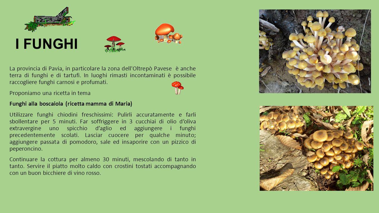 I FUNGHI La provincia di Pavia, in particolare la zona dell'Oltrepò Pavese è anche terra di funghi e di tartufi. In luoghi rimasti incontaminati è pos