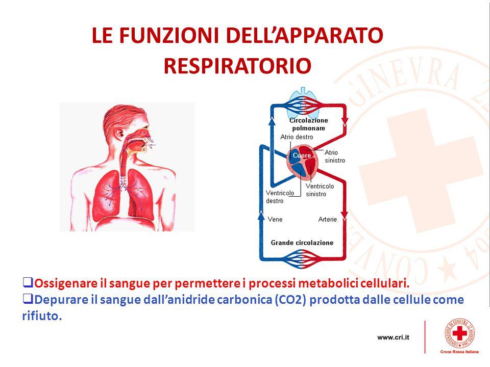  Ossigenare il sangue per permettere i processi metabolici cellulari.