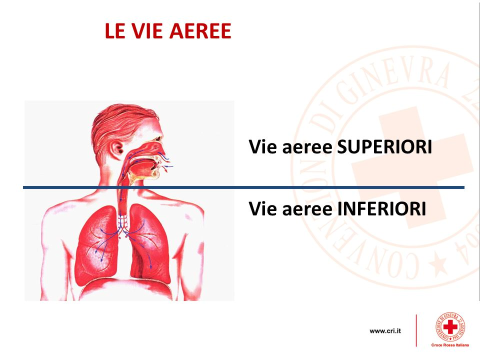LE VIE AEREE Vie aeree SUPERIORI Vie aeree INFERIORI