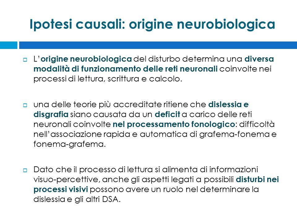 Ipotesi causali: origine neurobiologica  L' origine neurobiologica del disturbo determina una diversa modalità di funzionamento delle reti neuronali coinvolte nei processi di lettura, scrittura e calcolo.